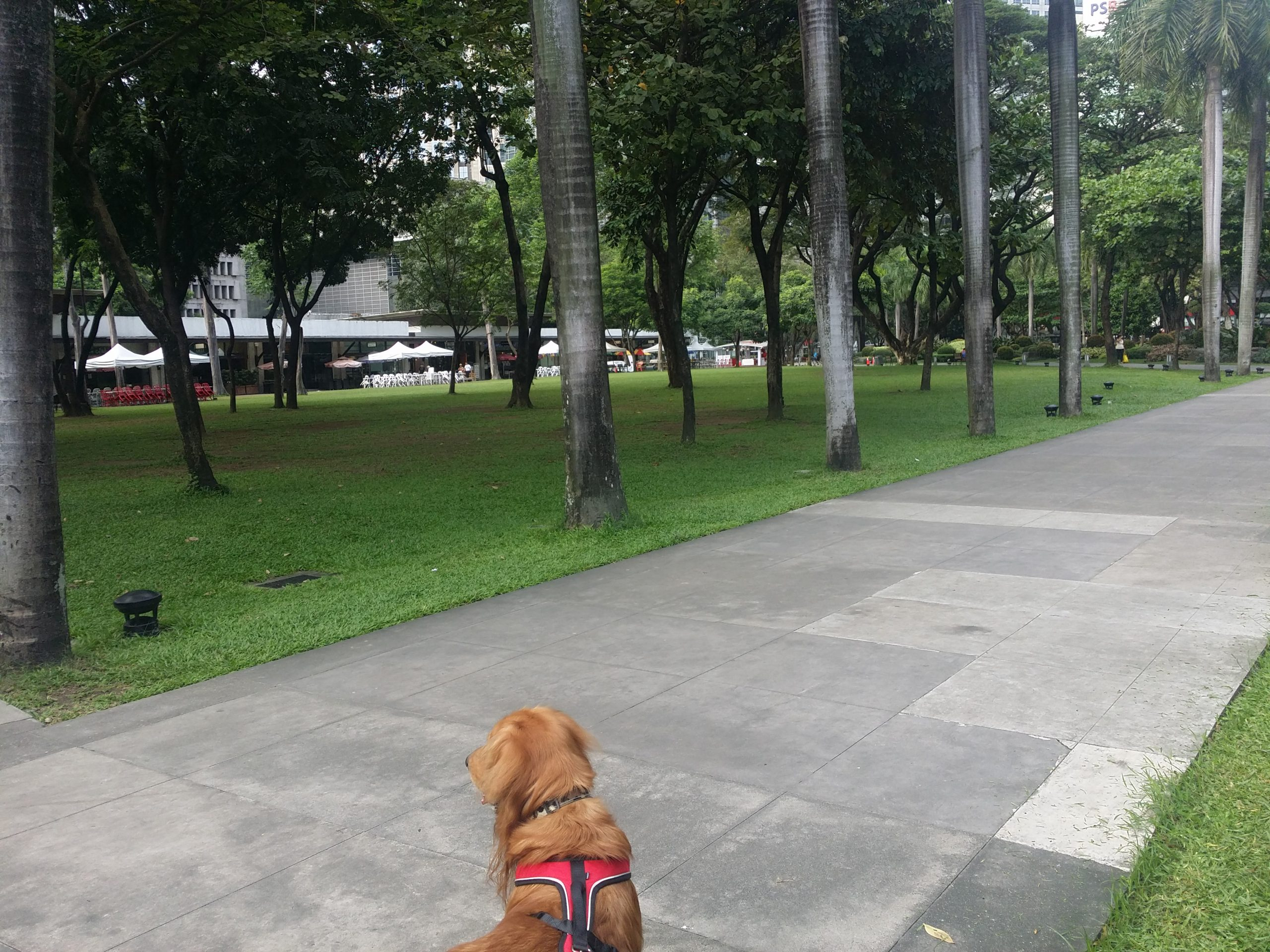 Scout at Ayala Triangle